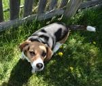 Heidi-in-backyard_DSC01872_May1014GratianaLovelace