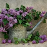 PurpleLilacBush-plantedinTinWateringCan_Dec2914pinterest-sized