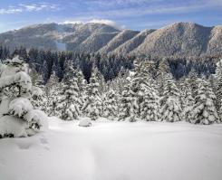 snowy-pine-forest_Nov2315pinterest-sized-comp-wSnowyFirTrees1