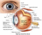 eye-diagram_Apr0516pinterest
