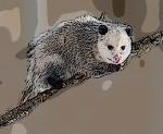 330px-opossum_2_oct3016wiki-bkgrnd-mask1-filter-posteredges