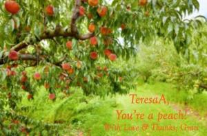 peach-orchard-stock-photo-tree-12074940_nov1516via123rfcom_grati-blur-titling