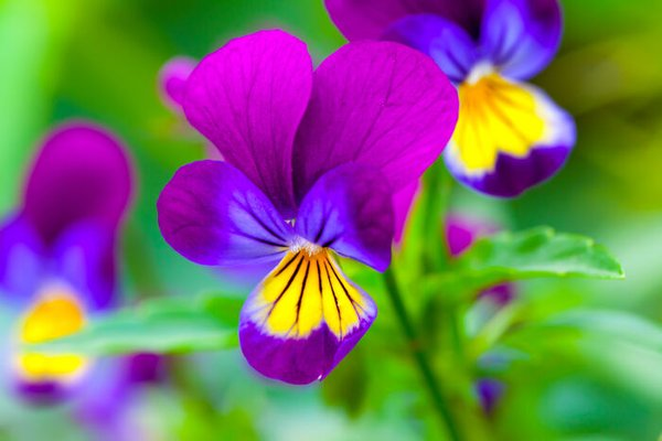 zzNature--purple-blue-yellow-flowers_Mar2716viaDinnysChild